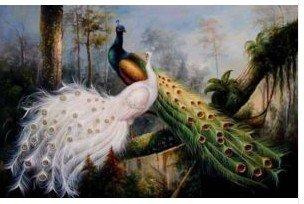 Pavão bonito 16 da pintura a óleo Hand-painted da lona