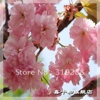 5pcs/bag pink cherry blossoms tree Seeds DIY Home Garden