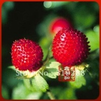 10pcs/bag Indian mock strawberry D. indica Seeds DIY Home Garden