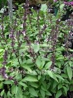 10pcs/bag Thai basil Seeds DIY Home Garden