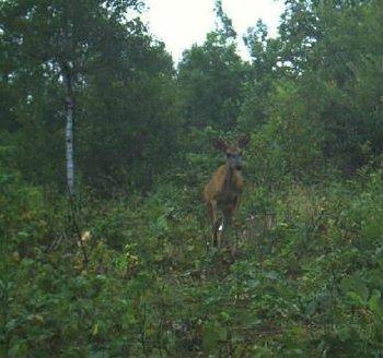 Night Vision Infrared Thermal Animal Trail Hunting Camera/Mini Game Scouting Camera