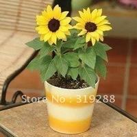 10pcs/bag Dwarf sunflower  flower Seeds DIY Home Garden