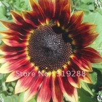 10pcs/bag Dwarf red sunflower  flower Seeds DIY Home Garden