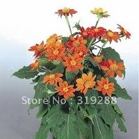 10pcs/bag Dwarf Mexican sunflower  flower Seeds DIY Home Garden
