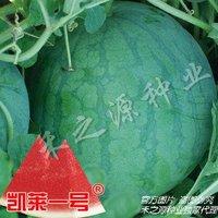 10pcs/bag Red seedless watermelon vegetable Seeds DIY Home Garden