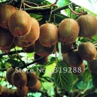 10pcs/bag Kiwi tree Seeds DIY Home Garden