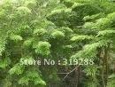 5pcs/bag India lobular Rosewood tree Seeds DIY Home Garden
