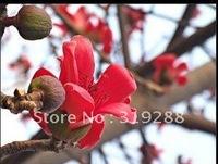 5pcs/bag Kapok tree Seeds DIY Home Garden