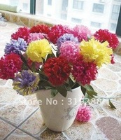 30pcs/bag Carnation Flower Seeds DIY Home Garden