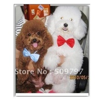 The pet dog tie the tie tie cat tie the dog dog accessories pet accessories cat adorn article