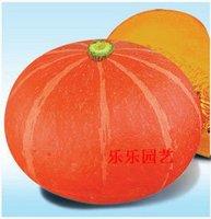 5pcs/bag red small pumpkin vegetable Seeds DIY Home Garden