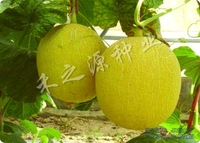 10pcs/bag yellow HaMi melon vegetable Seeds DIY Home Garden