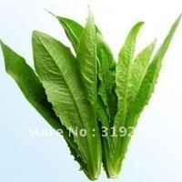 "100pcs/bag leafy vegetable ""YouMaiCai"" vegetable Seeds DIY Home Garden"
