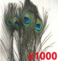 Eyed Peacock Tail Feathers,natural state, gorgeous,1000pcs /lot, 10&quot;-12&quot; inch
