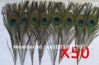 50 pcs Eyed Peacock Feather,10-12 inches. BIG EYED ( Eye Size over 4cm!!) Natural State, Free Shipping
