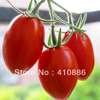 SALE  Brand Flower goddness 90 pieces Seeds (3packs)  free shiping