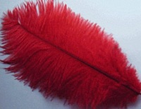free shipping ostrich feather ,12-14inch (30-35cm) 100piece/lot  ( red )