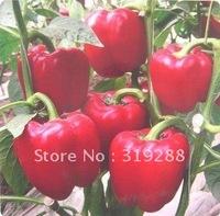 5pcs/bag red Sweet pepper vegetable Seeds DIY Home Garden