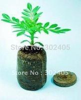 (60pcs-pack) Jiffy Soil Pellets Seeds Starting Plugs: 38mm Indoor Seed Starter- Start Planting Indoors for Planter Pot