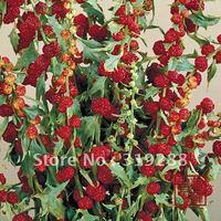 4pcs/bag Strawberry Spinach vegetable Seeds DIY Home Garden
