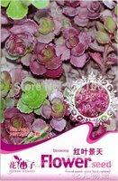 5 Pack 250 Seed Stonecrop Sedum linn Beauty Flower A134