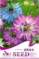 5 Pack 150+ Seed Fennel Flower Nigella Damascene Garden Plant A151