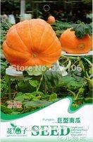 5 Pack  25 SEED Pumpkin seed DILL'S ATLANTIC GIANT pumpkin,  B032, free shipping