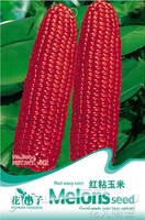 1 Pack 10 Seed Red Corn Seeds Maize Vegetable Green Food Hot B044