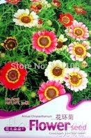 5 Pack 150+ Seed Annual chrysanthemum Chrysant hemun  flower Painted Daisy A018