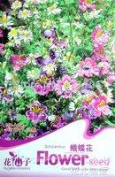 5 Pack 150 Seeds, Flower Schizanthus Pinnatus, veyr beautiful, A037