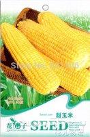 5 Pack 50 seed Sweet Corn , DIY home Garden Corn, Vegetable Seeds, B060, free shipping