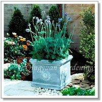 10pcs/bag purple Fernleaf Lavender Seeds DIY Home Garden
