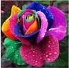 400 NEW RAINBOW ROSE SEEDS ONLY $5.99 OWNER JUST WANTED TO WIN GOOD REPUTATION  * MULTI-COLOR RAINBOW ROSE * FREE SHIPPING(China (Mainland))