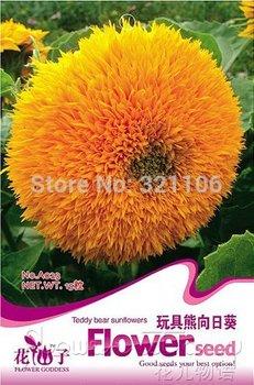 1 Packs 20 Seeds Garden Flower Teddy Bear Sunflower SEMI-DWARF A023