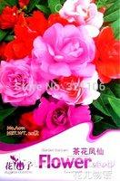 1 Pack 20 Seeds  Camellia Impatiens , Mix Color Balsam Flowers Seeds A011,Garden Flower