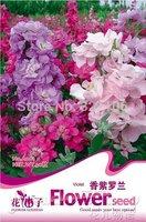 5Packs 150Seeds,DIY Home Garden Flowers ,Mix Color Oriental Violet Stock Flower Seeds.