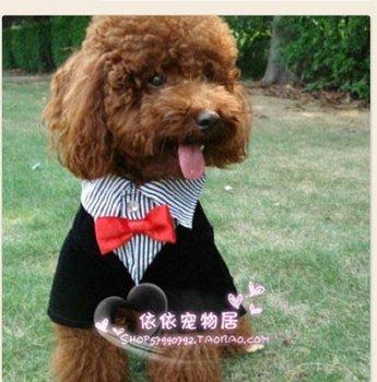 Fashoin pet apperal/Cute dog's clothes/Gentalman suit dress  looks like 2 pieces