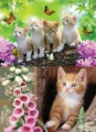 "25*35mm PET 3D high definition decorative picture of "" Lovely Cats "", 2 images change"