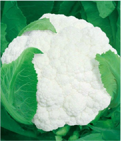 10 ORIGINAL PACKS 200 WHITE CAULIFLOWER SEEDS * NICE TASTY CAPE BROCCOLI * LOW IN FAT, BUT HIGH IN FIBER, WATER & VITAMIN C.(China (Mainland))