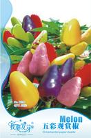 10 ORIGINAL PACKS 80 SEEDS CHINA WONDER ORANGE BELL SWEET PEPPER SEEDS * EZ TO GROW * SWEET ORANGE BELL PEPPER * FREE SHIPPING