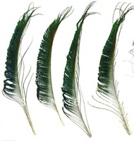 Wholesale 50pcs 30-35cm 12-14 inches natural peacock feather peacock plume peacock plumage Free Shipping