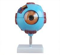 Giant Eye Model medical science model  Eye Anatomical model Giant eye model