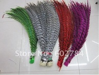 EMS free shipping 50pcs 30-35inch 80-90cm Dyed pheasant tail feather,Lady side tail,Lady amherst side tails,pheasant feather