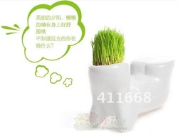 Free shipping DIY Cultivation Plants Eco Desk Garden Decoration Plant Magic Grass Little White Man Planting Grass 50pcs(China (Mainland))