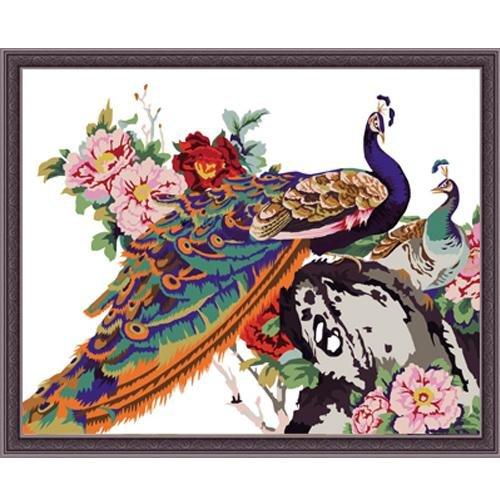 O pavão moldou a pintura da pintura a óleo DIY por Número 50x40cm (20x16 '') PBN QT7005