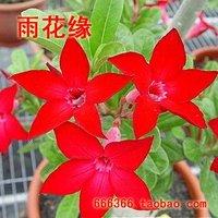 "5pcs/bag red adenium flower ""ChaoQun"" seeds DIY Home Garden"