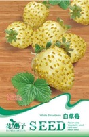 5 Pack 100 Seed White Strawberry Seeds Delicious Sweet Fruit Seed B056