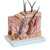 Reproductive organs MODELS FOR surginal doctor training Model model
