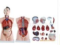 MEDICAL TRAINING Minikin 85cm male model 19 human model medical model of human body Flaux skin