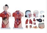 MEDICAL TRAINING Minikin 42cm female model 15 human body human model human model Flaux skin